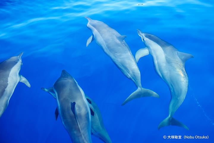 dolphin_3