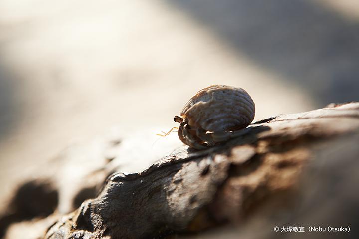 Hermit crab_2