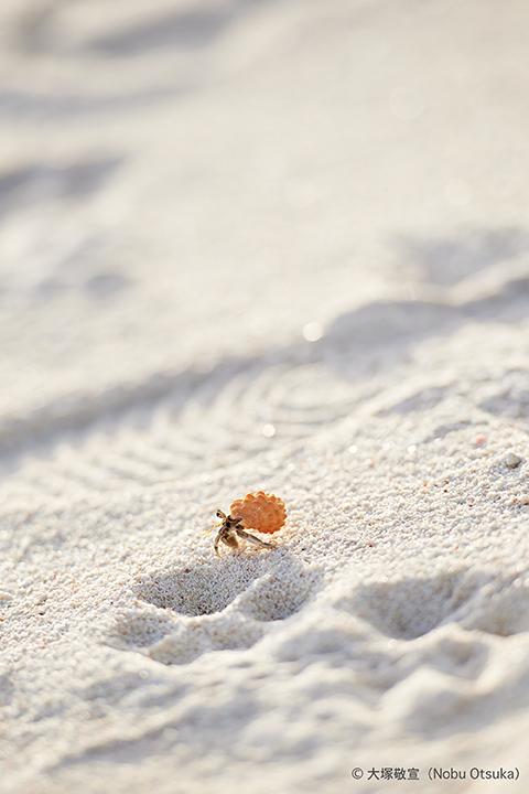 Hermit crab_3