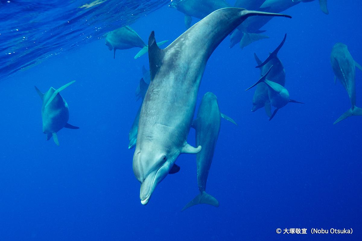 dolphin2_2
