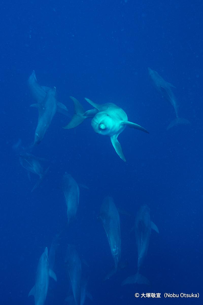 dolphin2_4