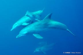 dolphin4_1